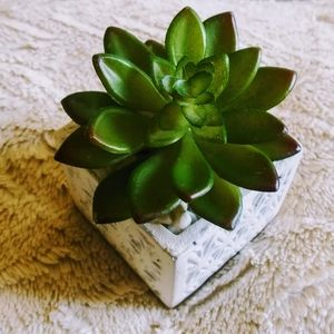 🌿 White Stone Medium Size Succulent